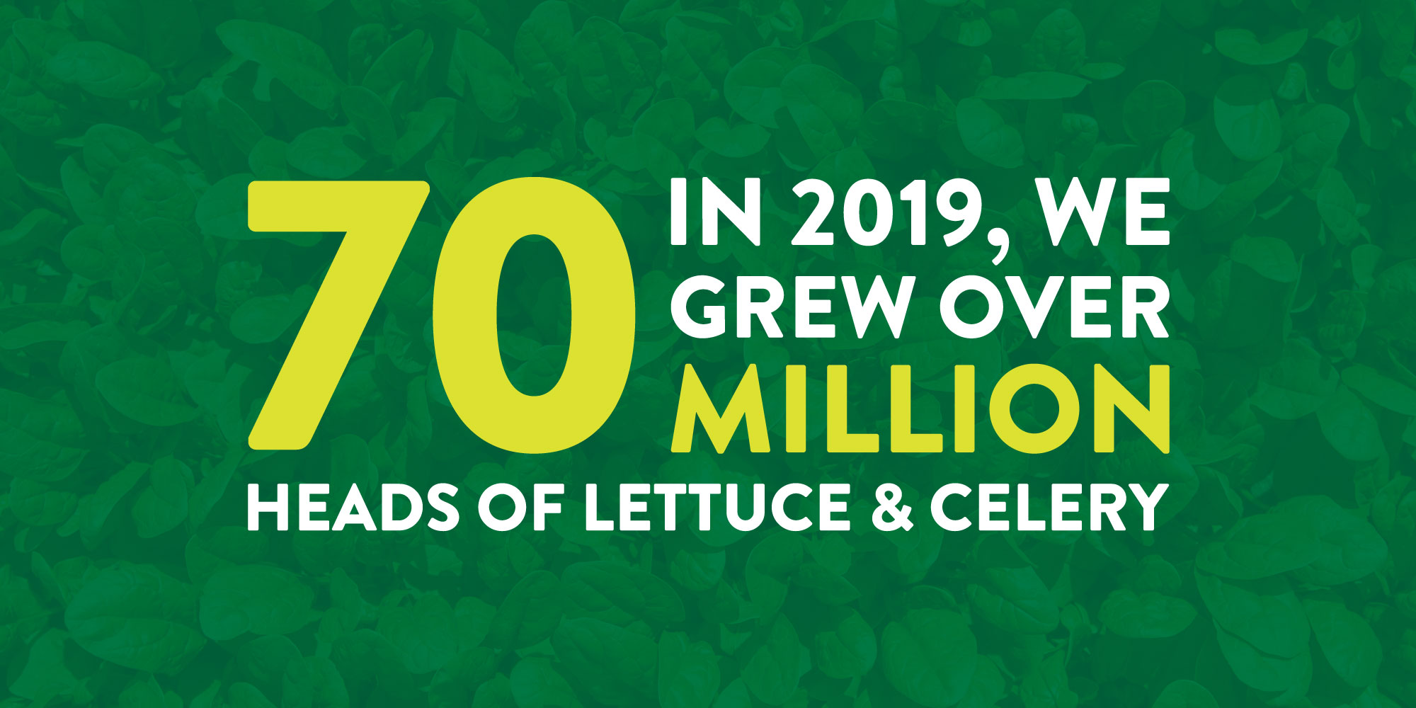 In 2019, we grew over 70 million heads of lettuce & celery